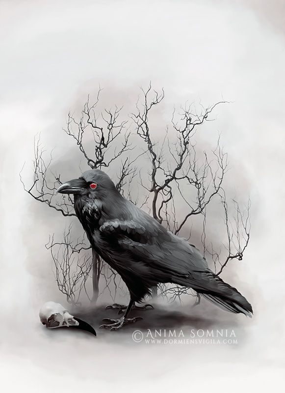 Raven Artwork by Anima Somnia www.dormiensvigila.com animasomnia.tumblr.com -- Resources / Stock images: CGtextures (raven, branches) and freeimages (skull).