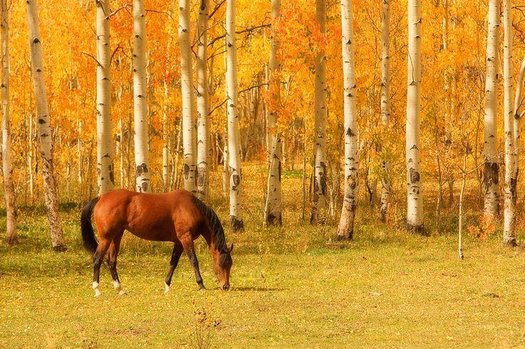 Horse in the Autumn Pasture