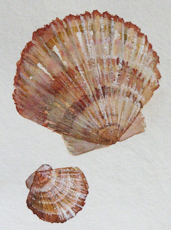 Original watercolour painting shell study III by SeasideStudiosUK