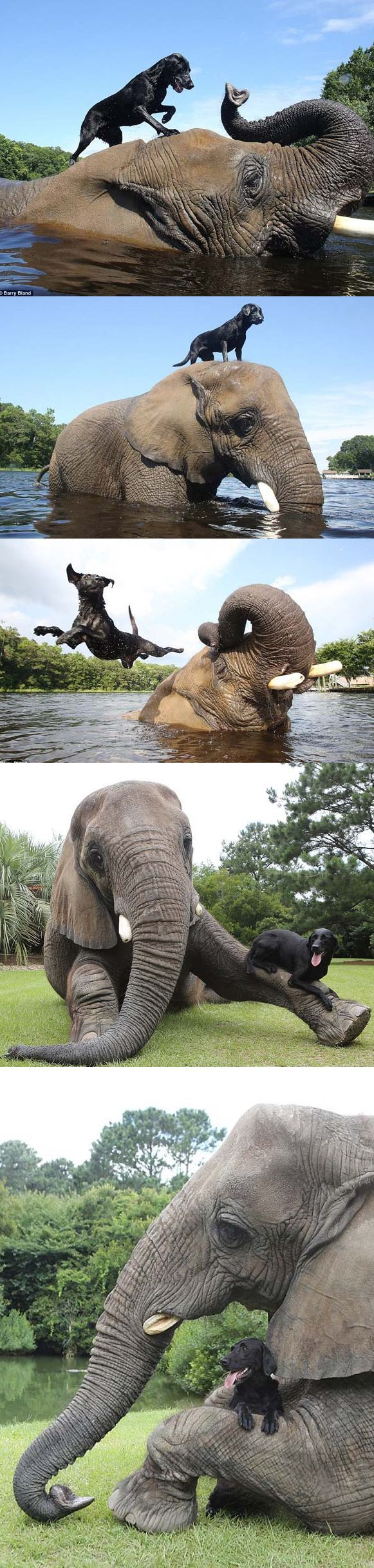 Bubbles the elephant was rescued when she was just a baby, but she hasn't been alone. This orphan made an amazing friend at her sanctuary and their antics are epic. Bella and Bubbles live in Myrtle Beach, South Carolina