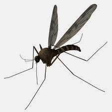 """DiaryAwareness's: Mosquito bite allergy """"Ek Villian"""""""