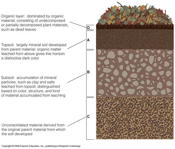morriscourse elements of ecology images soil horizons diagram jpg