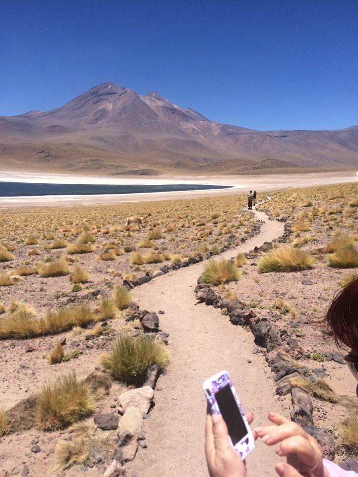 Lago Miscanti, Atacama, Chile