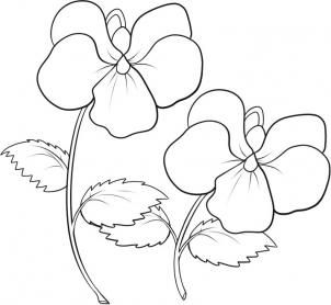 How to Draw Violets, Step by Step, Flowers, Pop Culture, FREE Online Drawing Tutorial, Added by Dawn, September 6, 2010, 3:03:12 pm