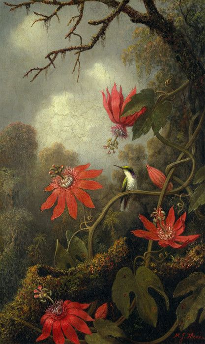 Hummingbird and Passion Flowers by Martin Johnson Heade | Art Posters