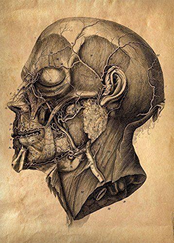 Poster-Nachdruck Vintage-Anatomiemotiv menschlicher Kopf, 250g/m², glänzend, A3 World of Art http://www.amazon.de/dp/B009DJS4WU/ref=cm_sw_r_pi_dp_c2Rlvb04ME9R0