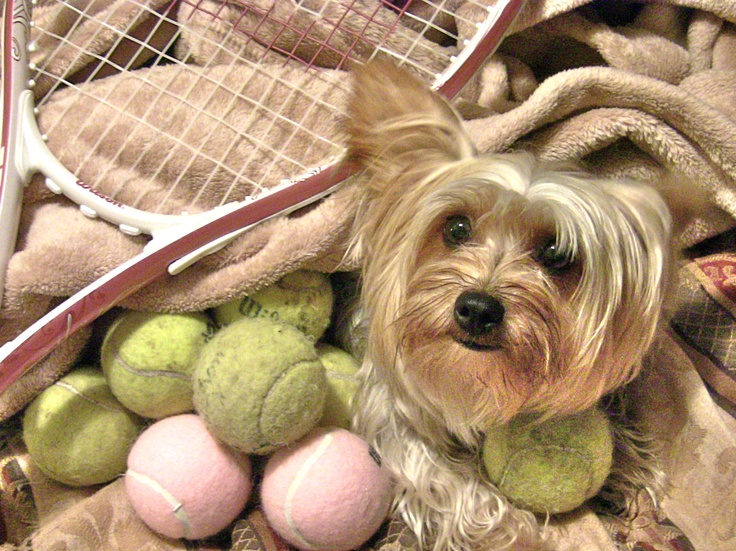 Image result for play game yorkie
