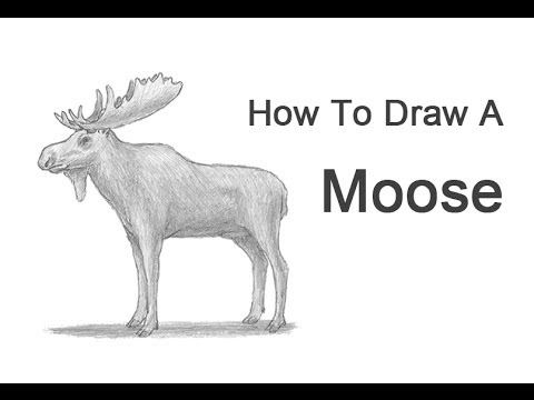 17 best images about moose on pinterest drawings for How to draw a moos