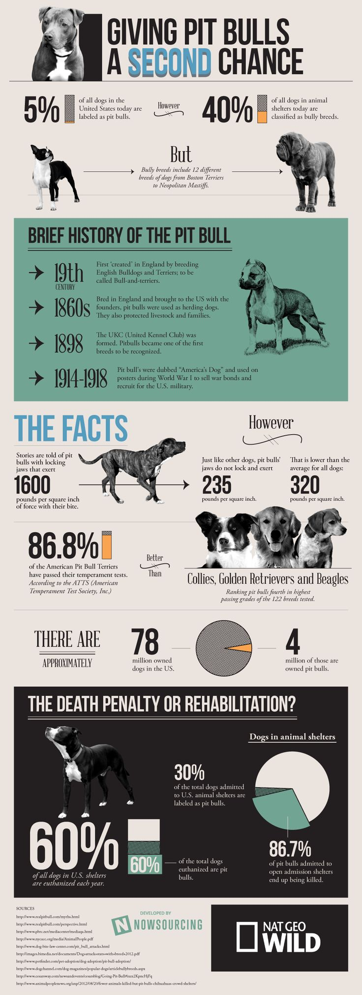 look into the truth about the pit bull breed. Internet Site, Pitt Bull ...