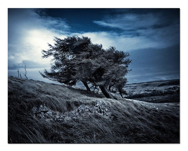 Could character be standing up for your principals? Trees in the wind, Lomond Hills   Flickr - Photo Sharing! cc license