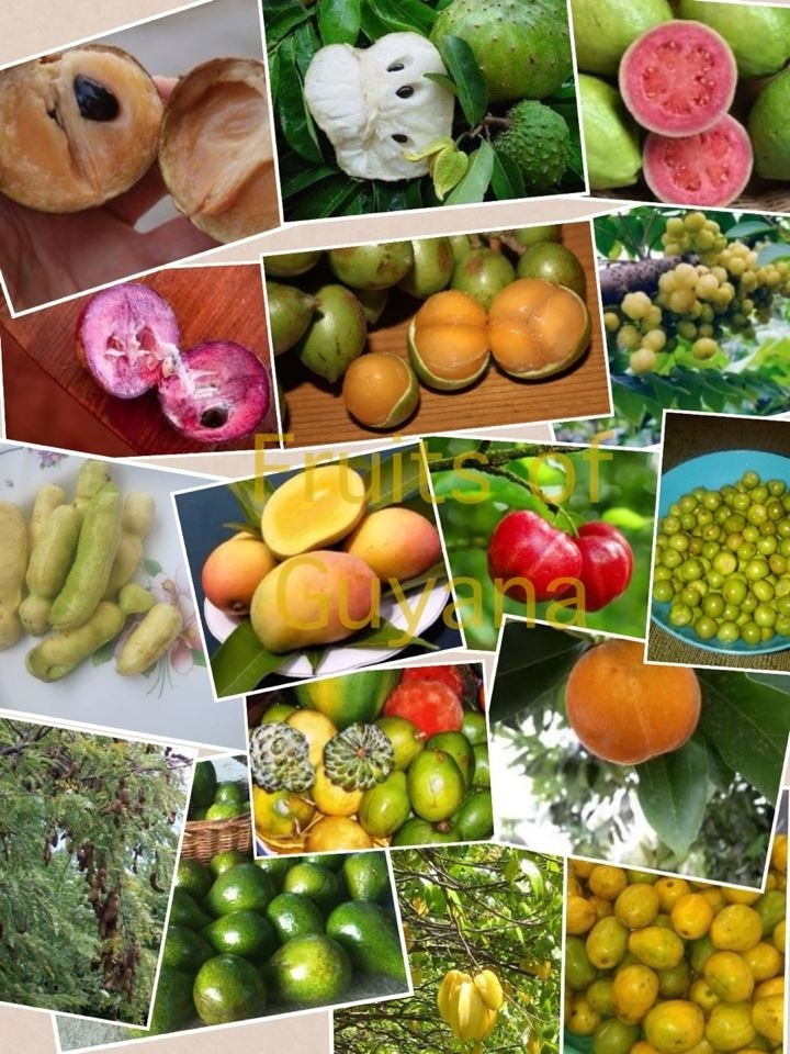 fruits of guyana south america