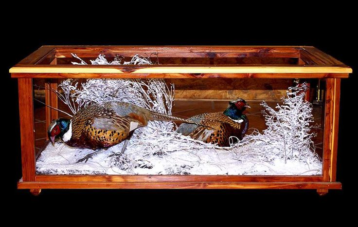 pheasant mounts in glass table | Pheasants in Glass Case