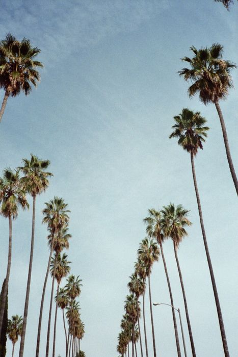 Hollywood: Life Quotes, California Travel, Endless Summer, The Angel, Palms Trees, Losangel, Quotes About Life, Life Goes On, Best Quotes