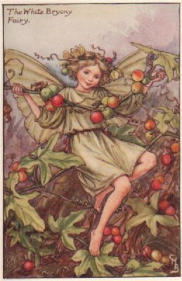 "White Bryony Fairy by Cicely Mary Barker. Autumn Flower Fairies, print c1935 ""The Book of the Flower Fairies""; Poem and Pictures by Cicely Mary Barker, Published by Blackie & Son Limited, London [Autumn]"