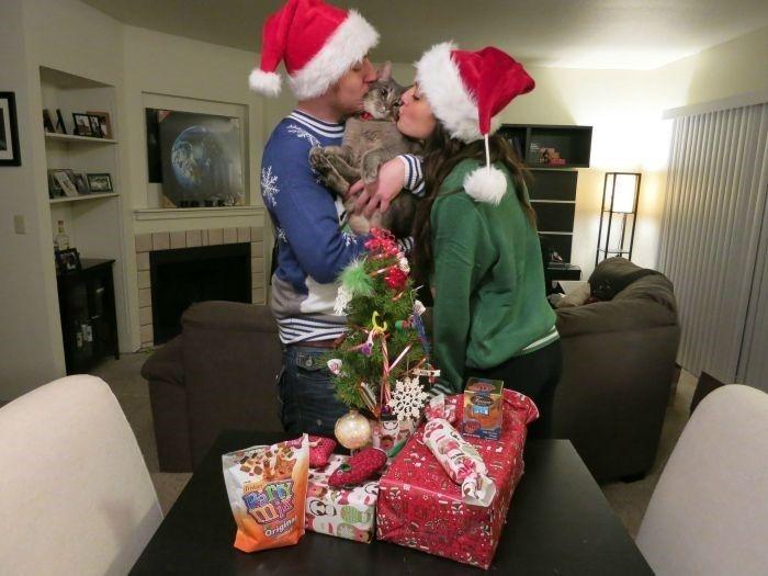 Funny Pet Before Christmas – 20 Pics