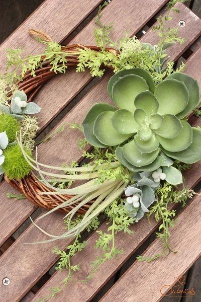 ツキイチリースでした♪ Chances News 多肉植物のリース  #wreath #green