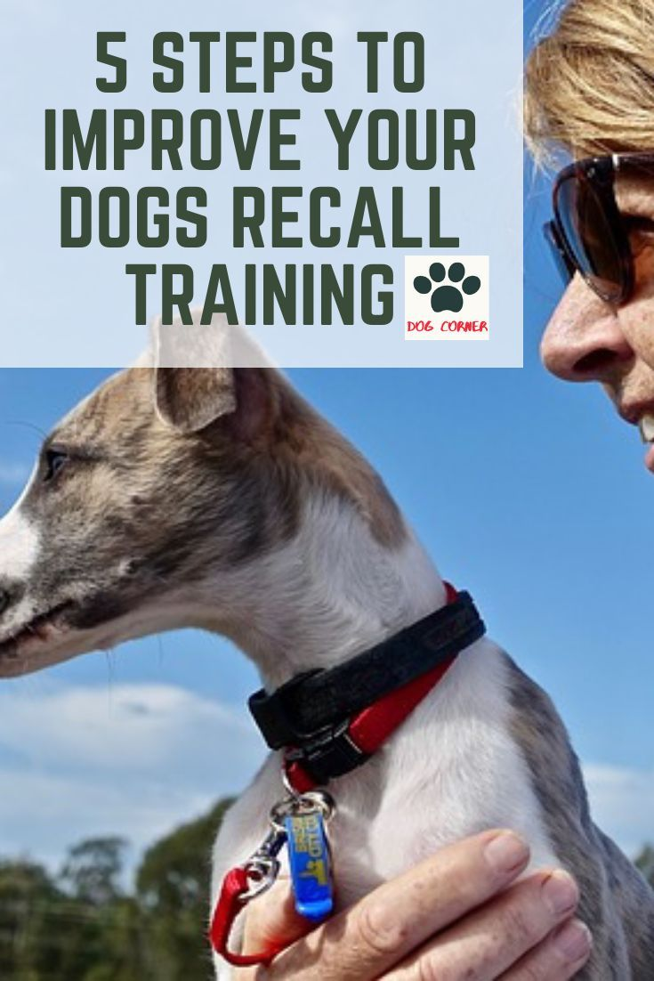 5 Steps To Improve Your Dogs Recall Training Being One Of The