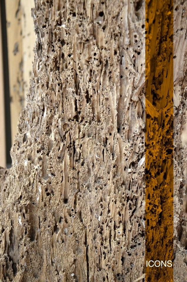 #Detail of a #Briccola just picked from #Venetian #canals / #Dettaglio della briccola appena colta dai #canali #veneziani. #Icons #furniture #material #materiale #oak #wood #rovere  #iconsfurniture