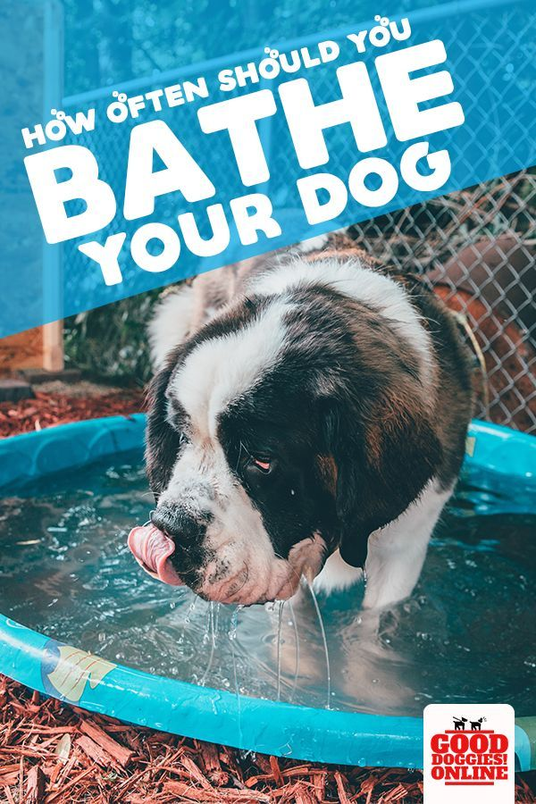 How Often To Bathe A Dog Dog Care Dogs Dog Training Books