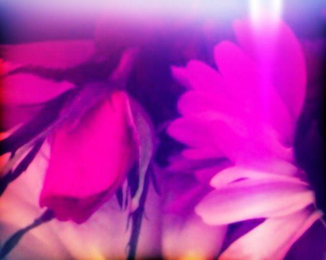 Roseknopp Rosebud Photo: Bente Kristin