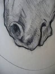 Image result for draw realistic horse ears