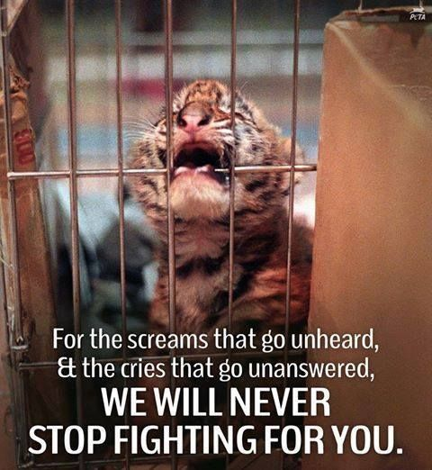 All animals deserved to be treated with respect.  Animals shouldn't be caged for doing something that's an instinct for them.  We share Earth with the, and the sooner we realize it, the better our society will become.
