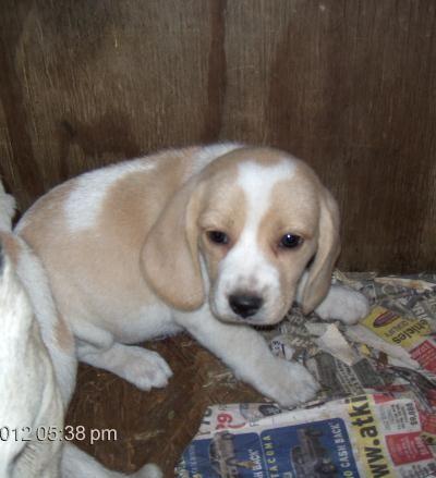 I love lemon beagles!