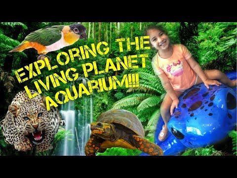 fun places: FAMILY Goes exploring the AQUARIUM!!! Cool animals fun ...