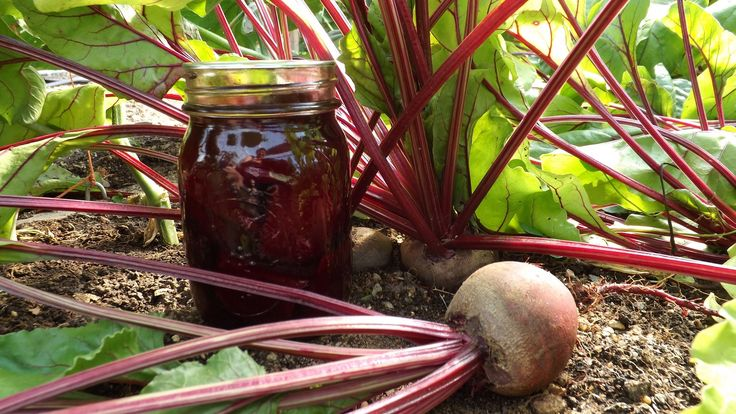 Here's how I canned pickled beets. This is an approved Ball recipe. Sweet Pickled Beets 10 cups prepared beets 2 1/2 cups white vinegar 1 cup water 1 cup gra...