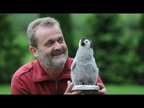 Planet Wissen – Das geheime Leben der Pinguine Klemens Pütz hat seinen Traumjob gefunden. Mehrmals im Jahr reist der Biologe auf die Südhalbkugel der Erde, denn er ist Deutschlands einziger selbstständiger Pinguinforscher. Die Faszination für die flugunfähigen Vögel hat er zufällig... - #Doku, #Menschen, #Natur, #Tiere, #WDR  https://www.dokuhouse.de/planet-wissen-das-geheime-leben-der-pinguine/