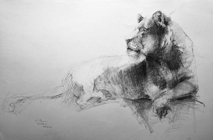 lioness pencil 100x70cm