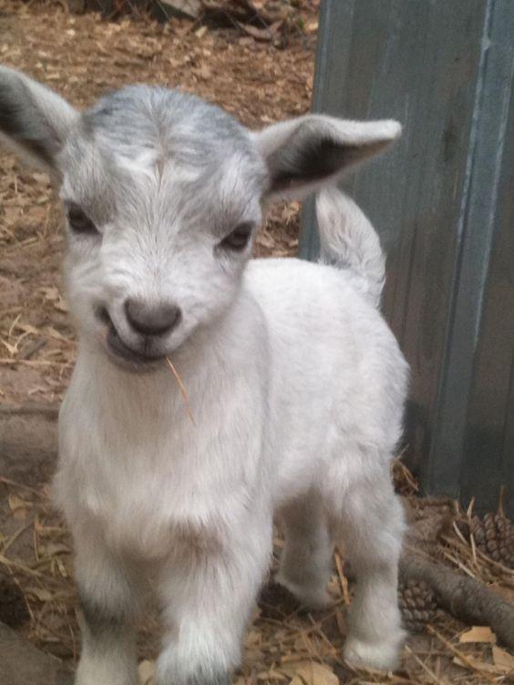 32 der süßesten kleinen Babys – Animals Blog – #Babys #Der #kleinen #süßeste…