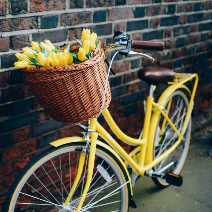 картинки яркие велосипеды своем докладе руководитель