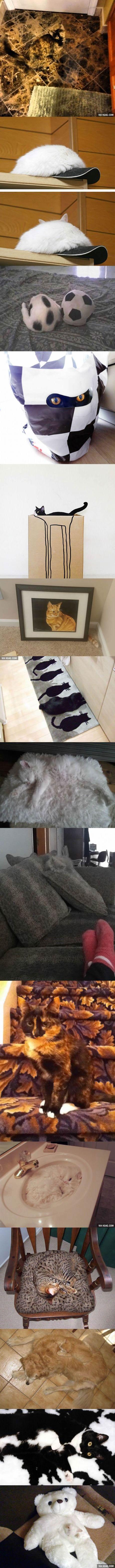 I don't see any cats... Oh wait http://amzn.to/2qVpaTc