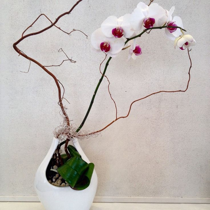 Orchid corporate display by Atelier Floristic Aleksandra