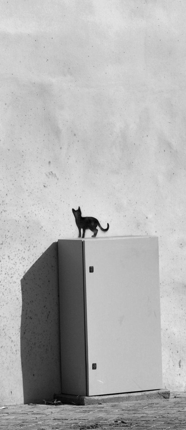 cat stencil ★ @Romeotees #nicosia #cyprus