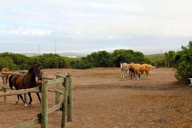 Adventure Series - Horseback vs. Horsepower by Dawn Jorgensen #Horses #Adventure #Travel http://www.grootbos.com/en/blog/travel/horse-riding-vs-horsepower