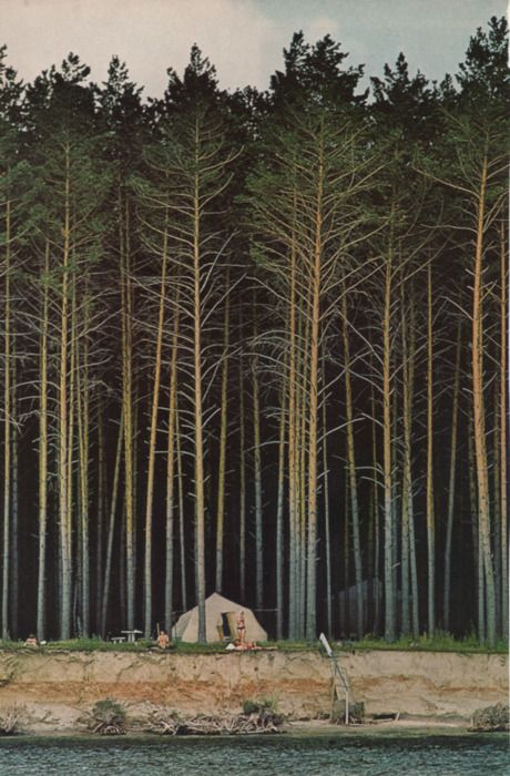 : Forests, National Geographic, The Edge, Tent, Trees, The Great Outdoor, Places, Pine, Natural