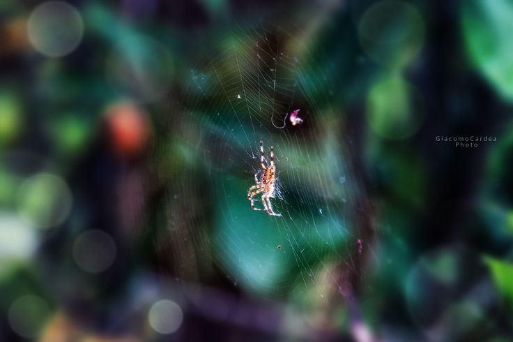 Spider's Web by Giacomo Cardea on 500px