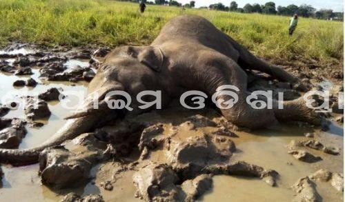 Prime Odisha News : ଦନ୍ତାହାତୀର ମୃତଦେହ ଠାବ