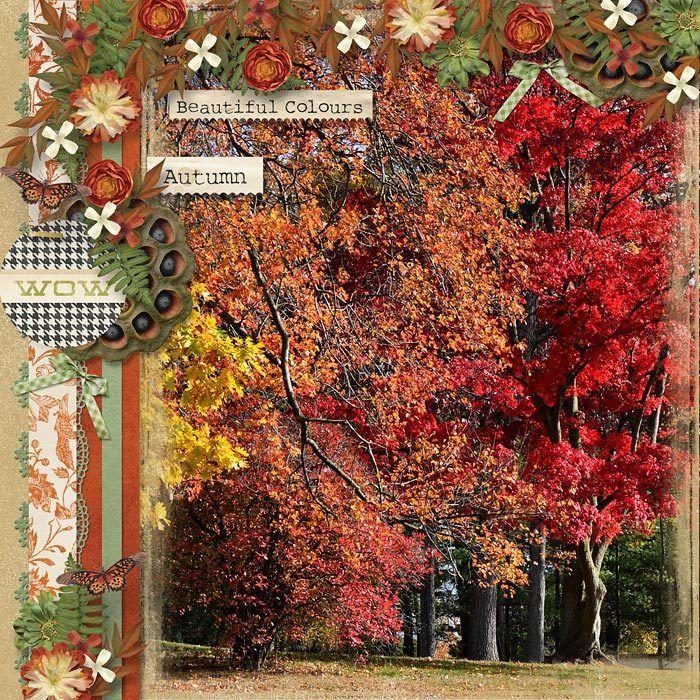 Autumn Color.jpg