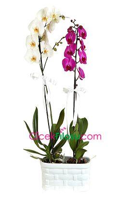 Bedeutung von Orchidee