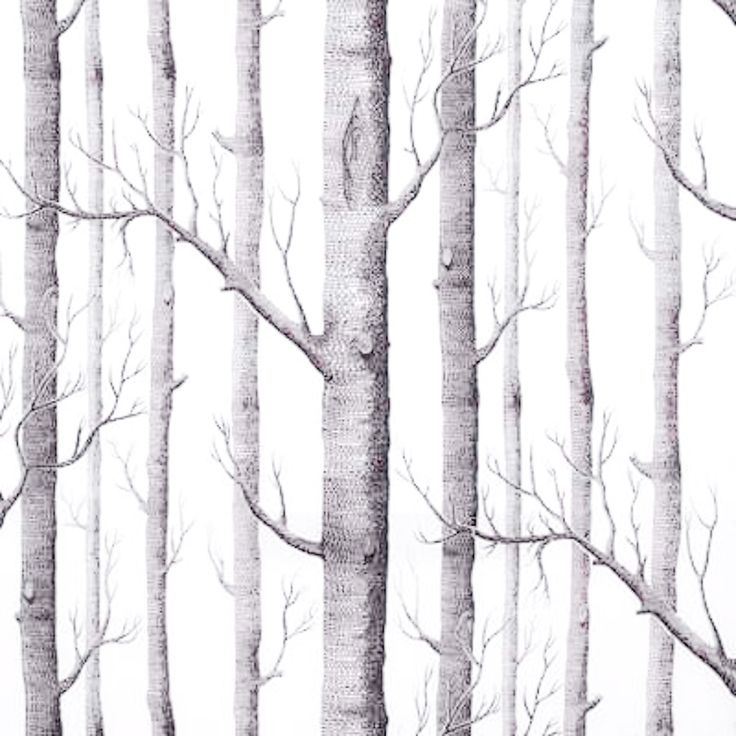 Eco chic wallpaper birch trees - message non friend facebook images