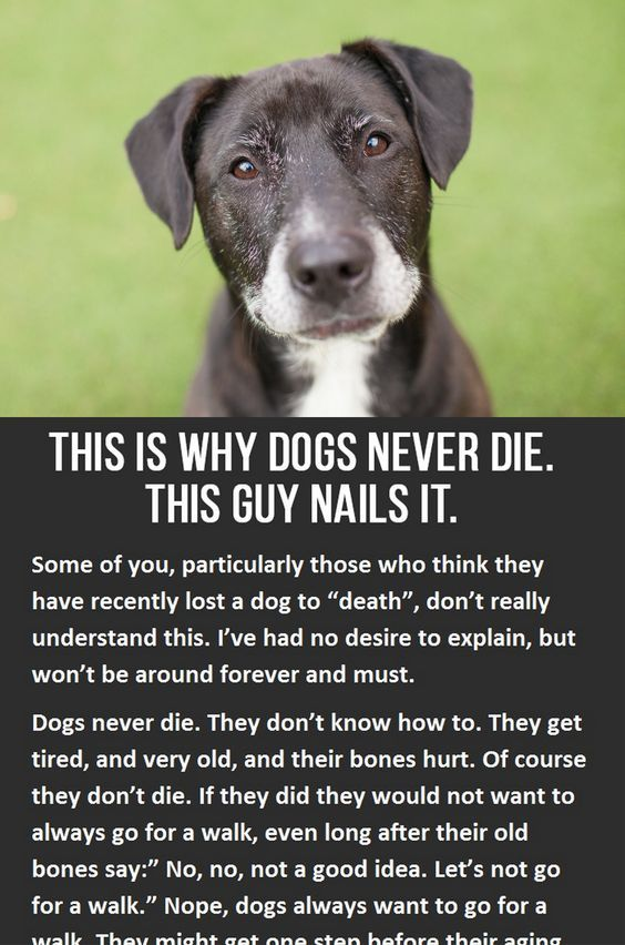 Best 25+ Pet quotes ideas on Pinterest Puppy quotes, Pet quotes - lost dog flyer examples
