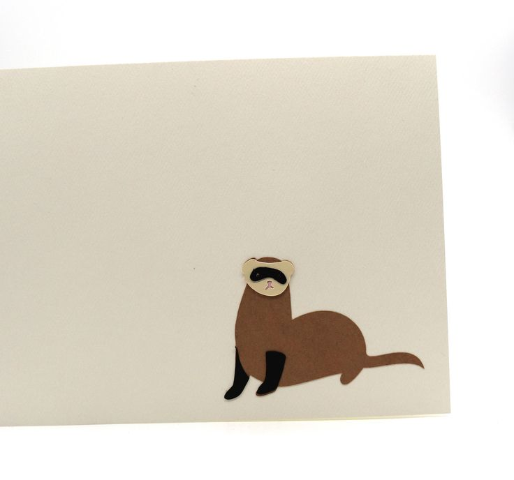Pinterestteki Den Fazla En Iyi Rescue Ferret Fikri - Rescued kitten adopted by ferrets now thinks shes a ferret too