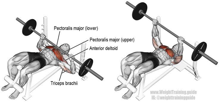 Press de banco declinado con barra. Un ejercicio compacto de empuje, ideal para la fuerza de la parte superior del cuerpo. Músculos trabajados: Pectoral Mayor Esternal, Pectoral Mayor Clavicular, Deltoides Anterior y Tríceps Braquial.