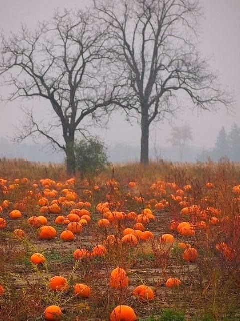 Pumpkin Patch, Ottawa, Canada