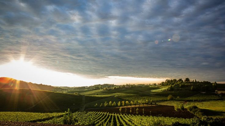 To see Italy off-the-beaten-path, head to southern Piedmont near the Ligurian border to explore Gavi territory, its food, and white DOCG wine.