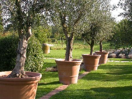 Mosaïc pots oliviers Les terrasses de la Méditerranée ...