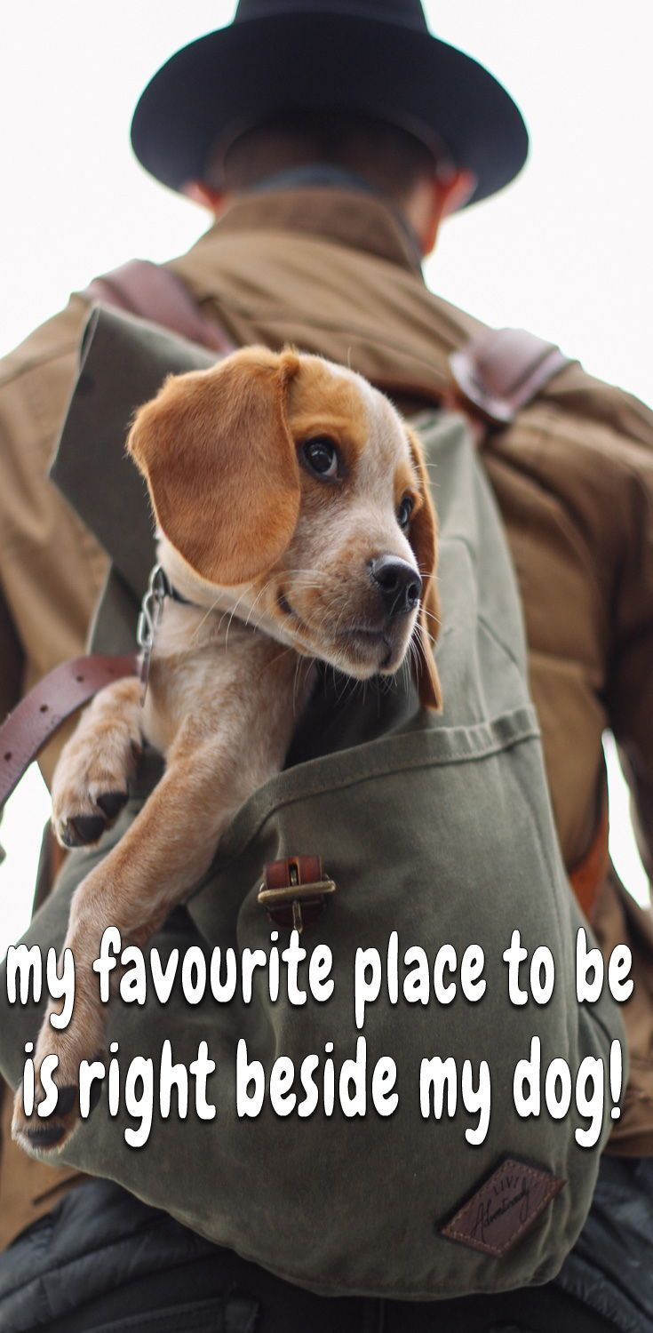 20 Dog Love Quotes That Express Exactly What I Love You Really